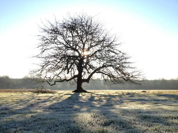 Winter tree in early morning frost